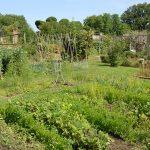 Garden_3_600