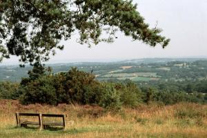 Around Pekes: Ashdown Forest
